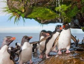Gay penguen isyanı
