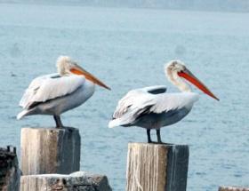 Kuşların limanı
