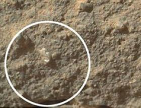 Mars çiçeği mi bulundu?