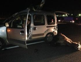 Çorluda feci kaza: At arabaya çarptı