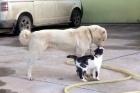 Kediyle köpeğin dostluğu