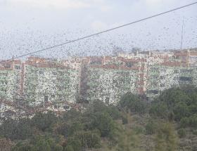 Çanakkalede sığırcık kuşları gösterisi