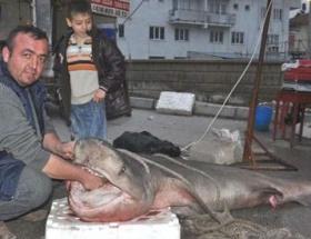 Pazar yerinde 350 kiloluk köpek balığı
