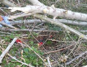 Kestirdiği ağacın altında kaldı