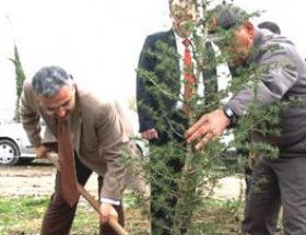 Çaycumada 10 sedir ağacı törenle dikildi
