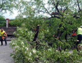 Asırlık ağaç, yolu kapattı