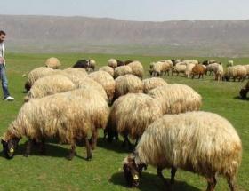 Çobanlar güvence istiyor