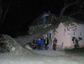 Dev ağaç evin üstüne devrildi