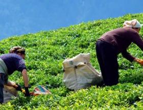 Türk çayı Brezilyada