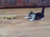 Minik kedi korkudan ne yapacağını şaşırdı