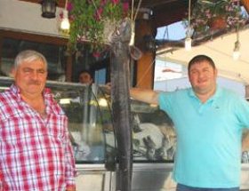 Çınarcıkta dev mığrı balığı yakalandı